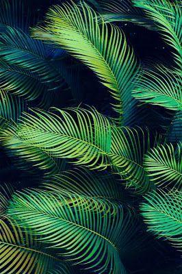 Palmeras tropicales - Tropical Dreams.