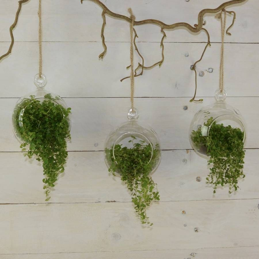 Are you interested in our glass ball terrariums with our bauble