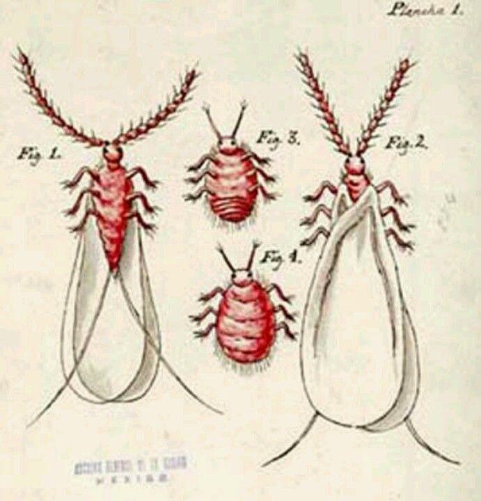 Pin En Cotton Apparel