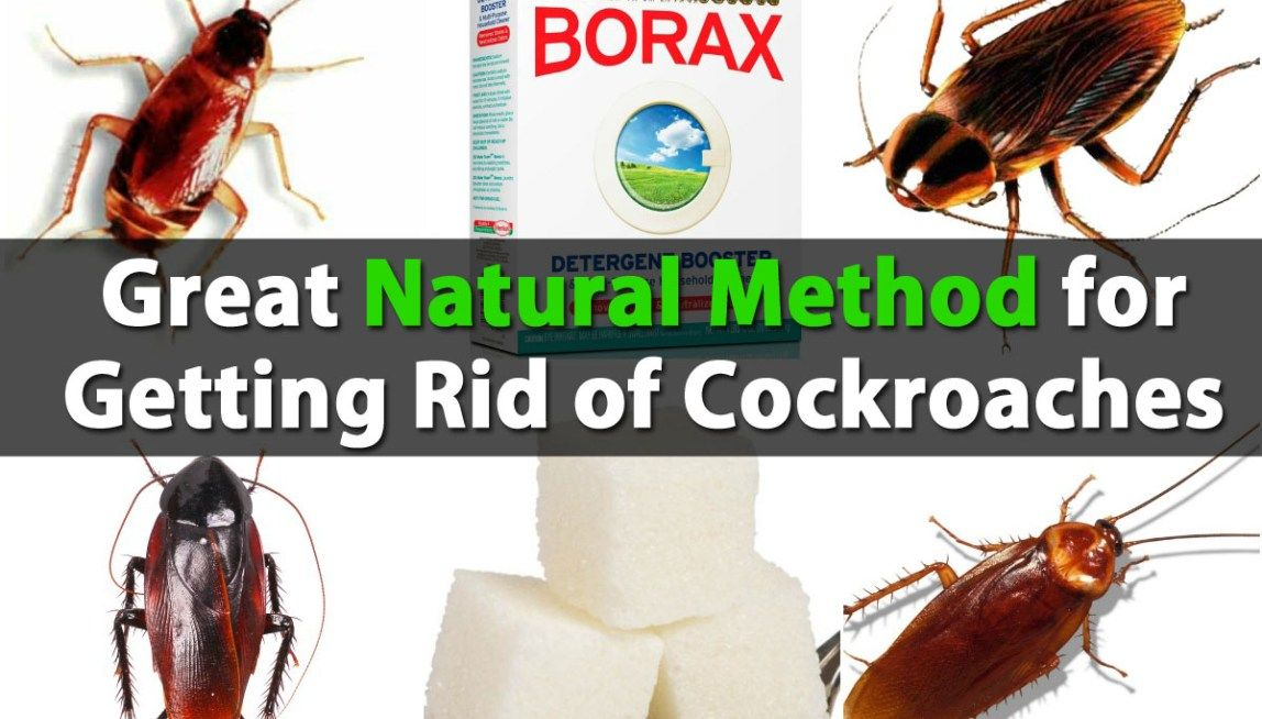 Great Natural Method for Getting Rid of Cockroaches Get