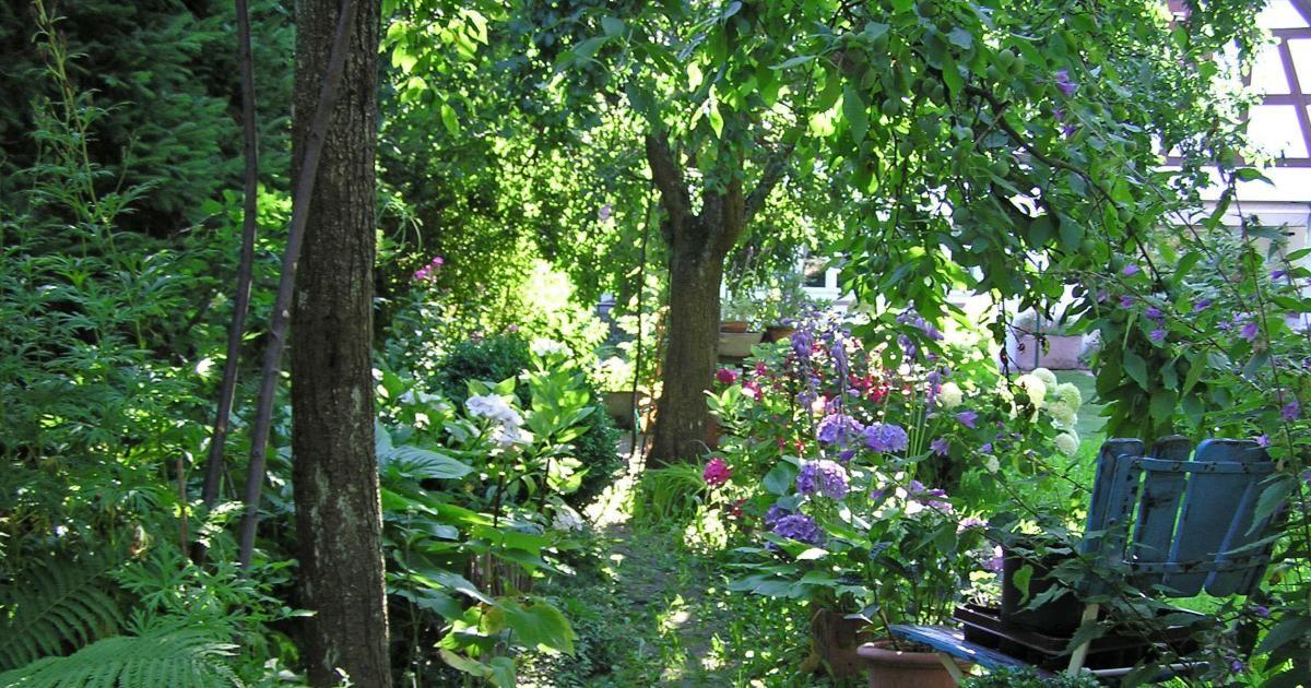 schattengarten gardening garten schattengarten und garten gestalten. Black Bedroom Furniture Sets. Home Design Ideas