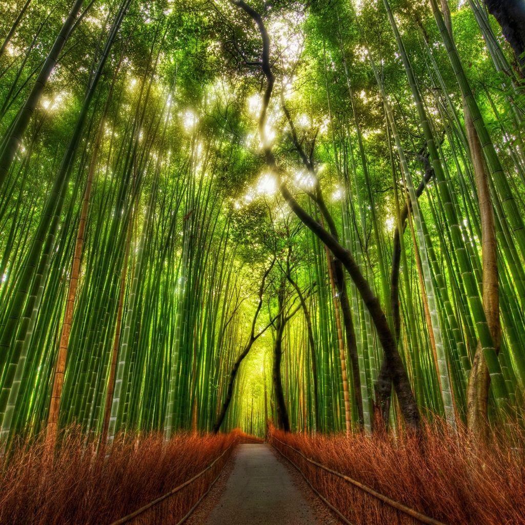 Bamboo design ipad air 2 wallpapers ipad air 2 wallpapers - Nature Bamboo Woodland Road Retina Ipad Air Wallpaper