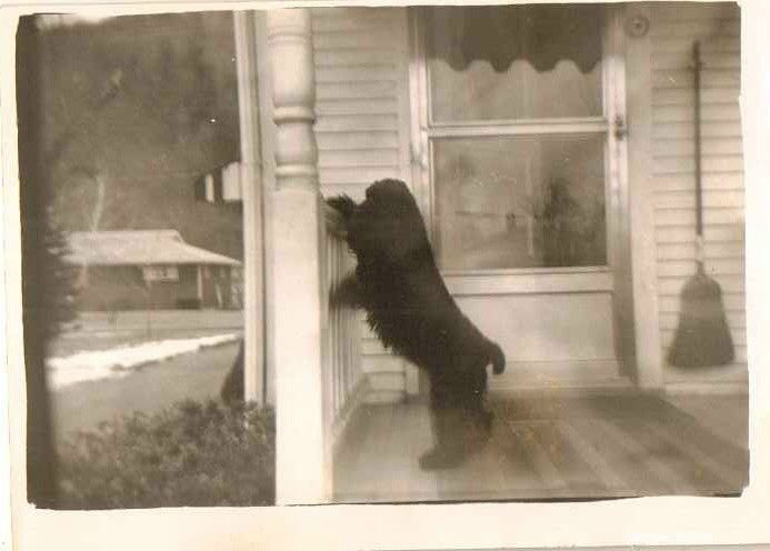 Vintage Antique Photograph Big Black Puppy Dog Standing Up on Front Porch