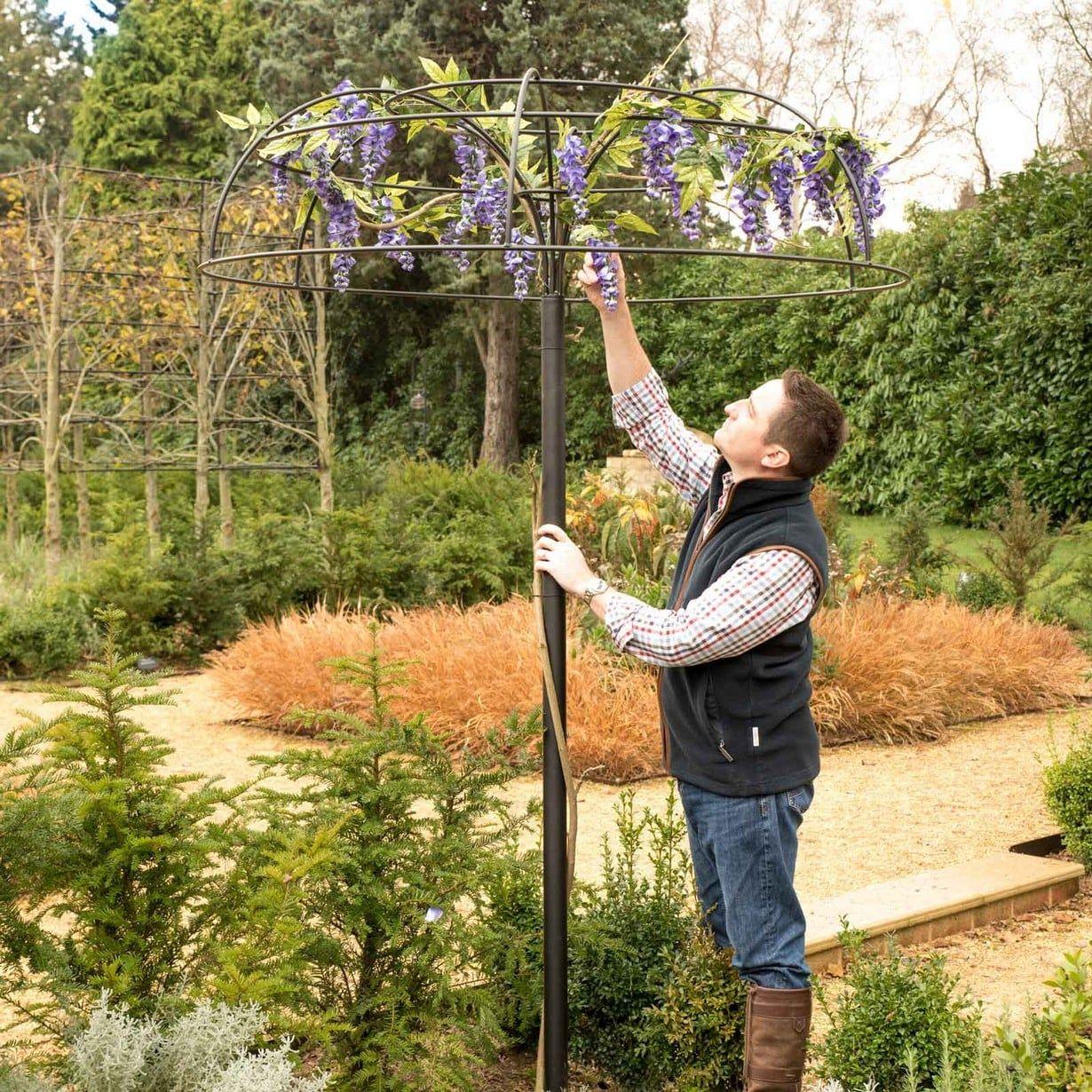Wisteria Umbrella Plant Support Harrod Horticultural Wisteria Plant Supports Climbing Plants