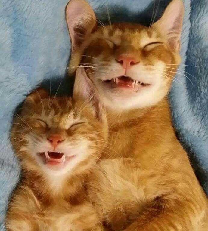 Cats Lose Their Baby Teeth When They Are Six Months Old Grappige Dieren Lachende Dieren Schattige Dieren