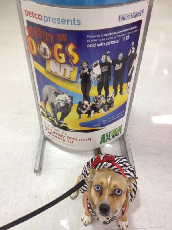 Advertising Banner Pet Store Veterinary Services Pets
