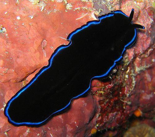 forum masculin despre condiloame virus del papiloma molestias