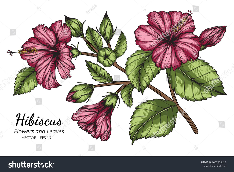 Hibiscus Flower Bedding Hibiscus Flower Aesthetic Hibiscus Flowers Hibiscus Plant