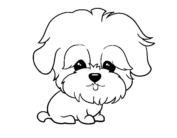 Dibujos Caras De Perros Maltes Buscar Con Google Aplicaciones