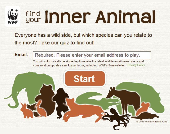 Wwf S Fun Quiz That Gathers Email Addresses At The Same Time