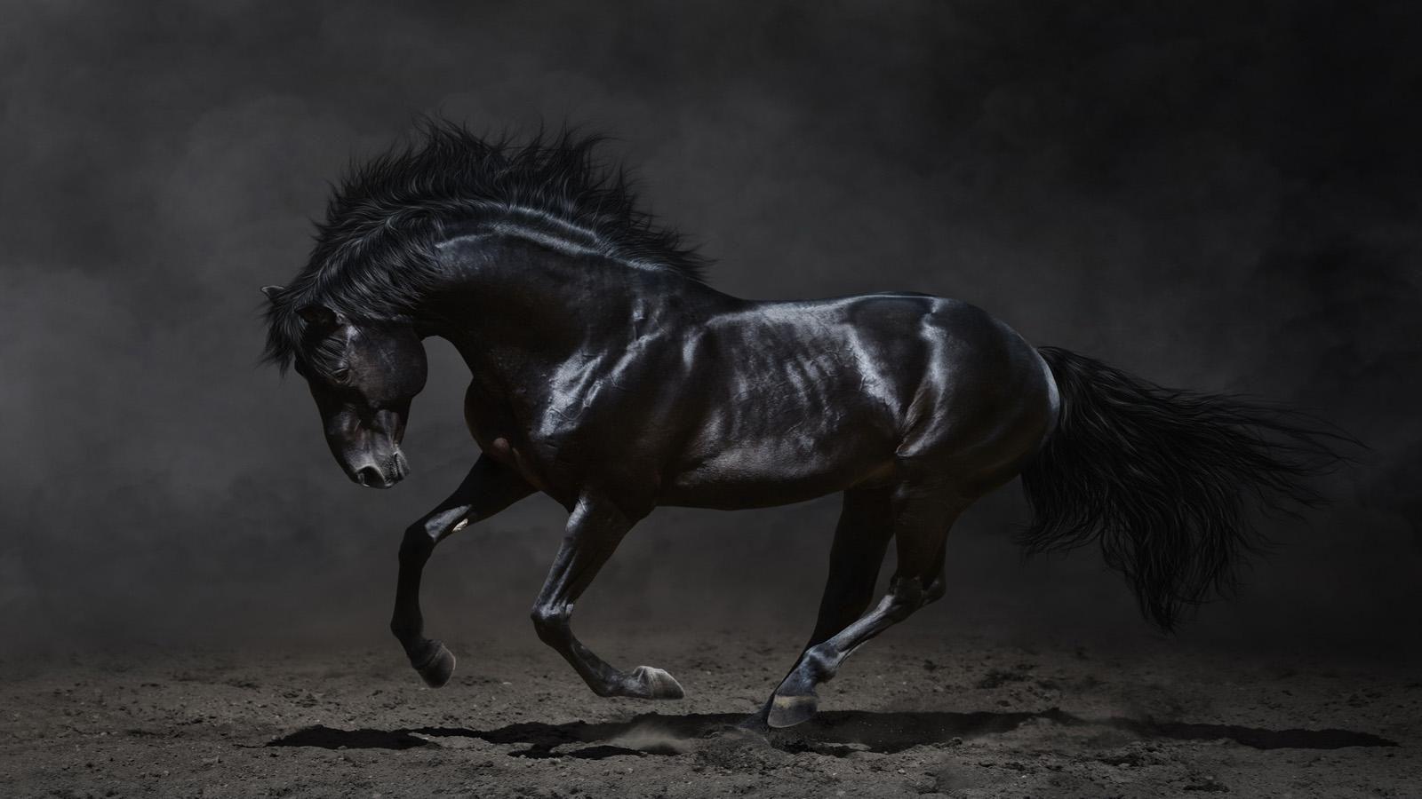 Wonderful Wallpaper Horse Gothic - cbb9c2be1bef3206a52baf4018768a9a  You Should Have_1003150.jpg