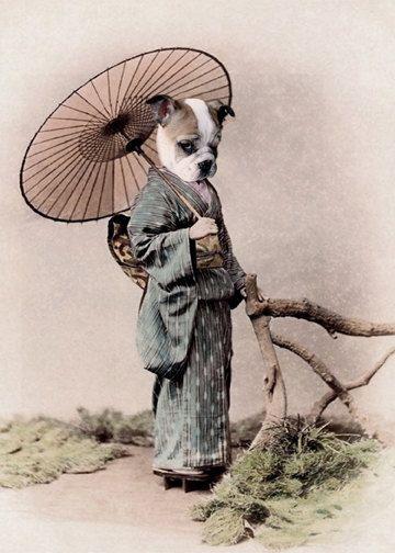 Antique Photo Dog Photography Dog Art Print Anthropomorphic Print Victorian Art Prints
