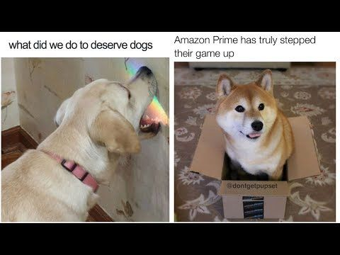 Youtube Happiest Dog Memes With Images Dog Memes Happy Dogs