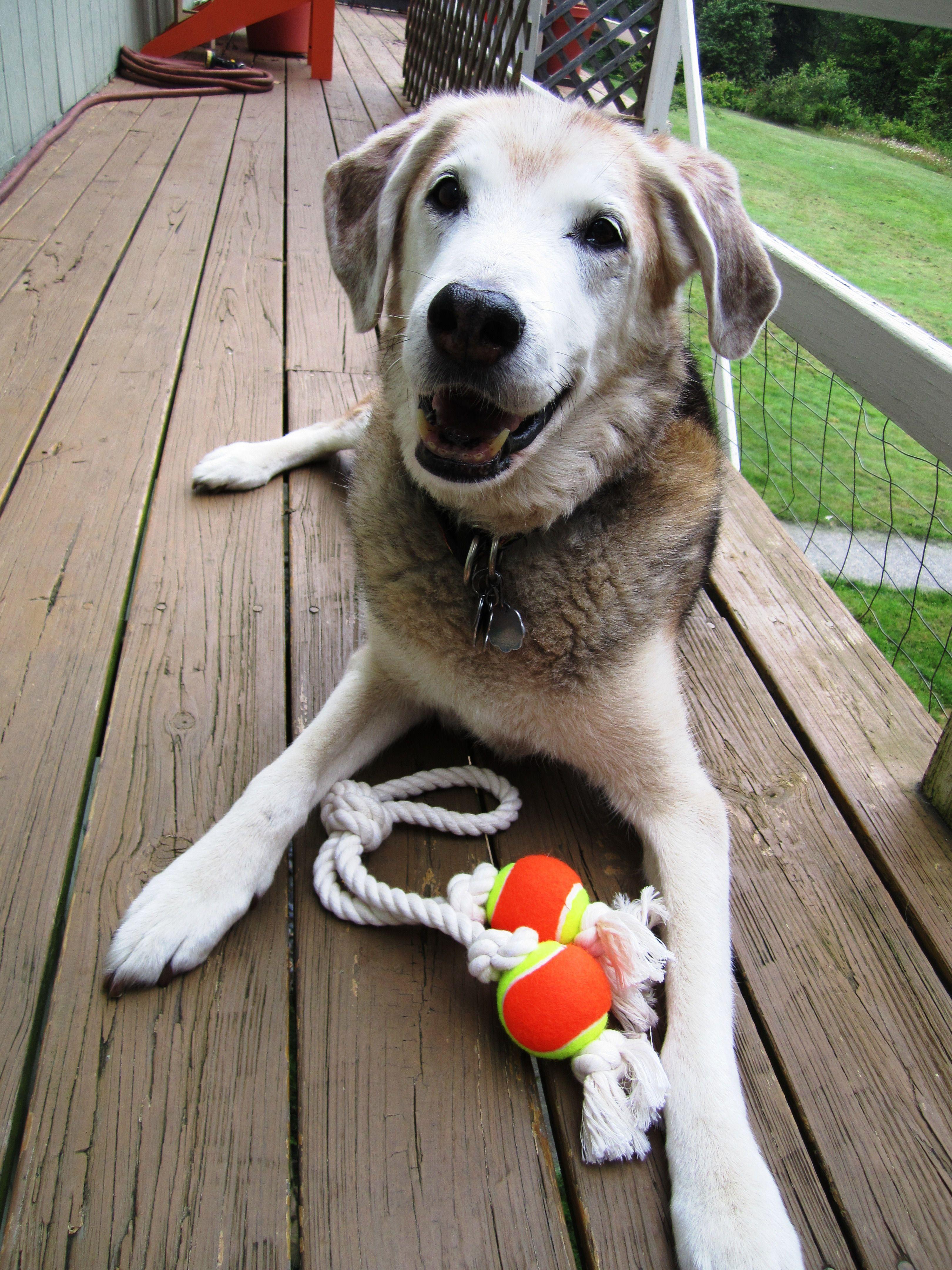 Where do all the toys go? Damien's Best Dog Toys Best