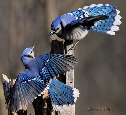 Published in National Geographic Backyard Guide to the ...