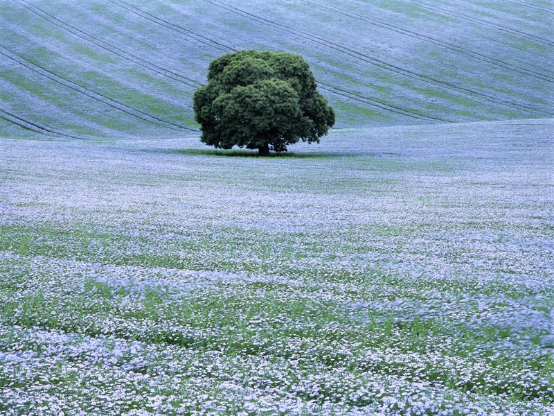 Willoughby Hedge, Wiltshire, England