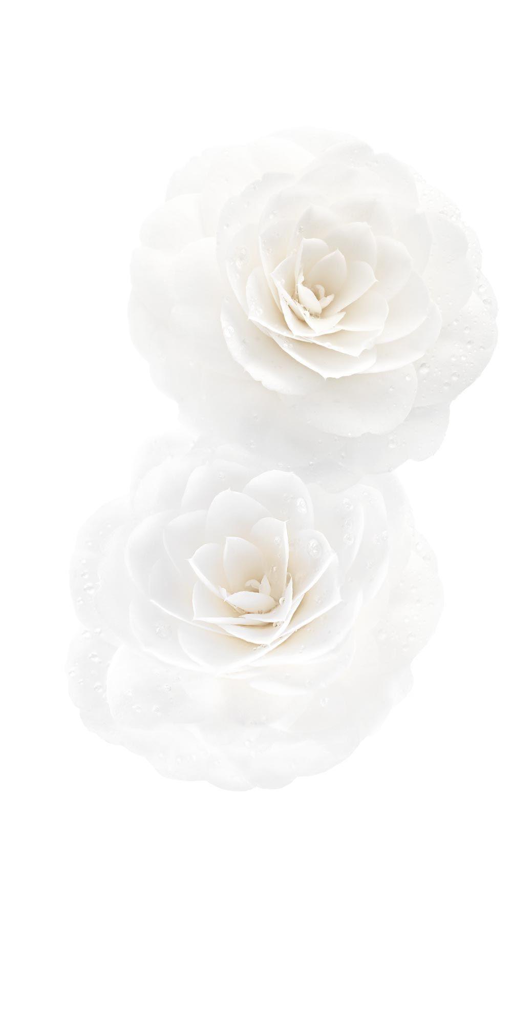 Chanel Hydra Beauty Nutrition Baume Nourrissant Levres Fond D Ecran Telephone Fond Ecran Blanc Motif Floral