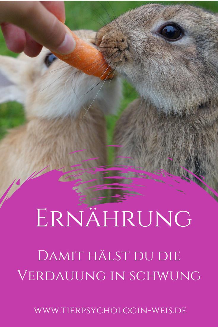 Damit Halst Du Die Verdauung In Schwung In 2020 Kaninchen Kaninchen Ernahrung Kaninchen Verhalten