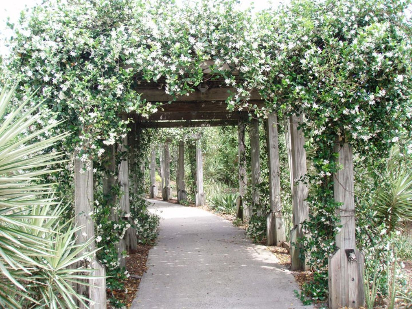 Private Back Yard Ideas - Stunning Beautiful Evergreen Vines Ideas For Your  Home 43 - 17 Best Climbing Plants For Pergolas And Trellises Arbors