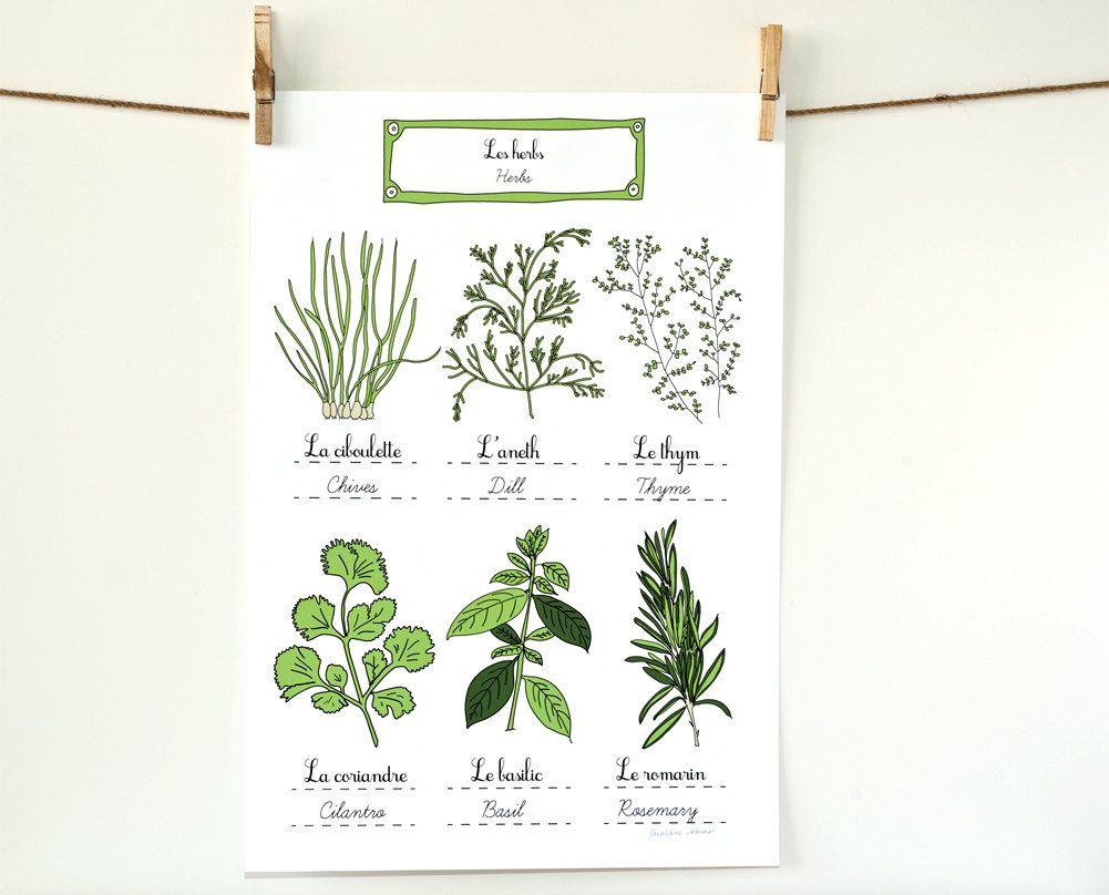 Food illustration posters herbs u summer vegetables kitchen art