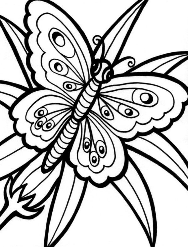 Butterfly Coloring Pages : Butterfly On Spring Coloring Page ...