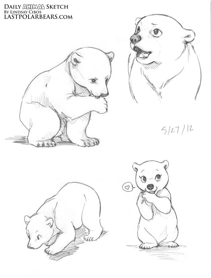 Lindsay Cibos\' Art Blog: Daily Animal Sketch – Polar Bear cubs ...