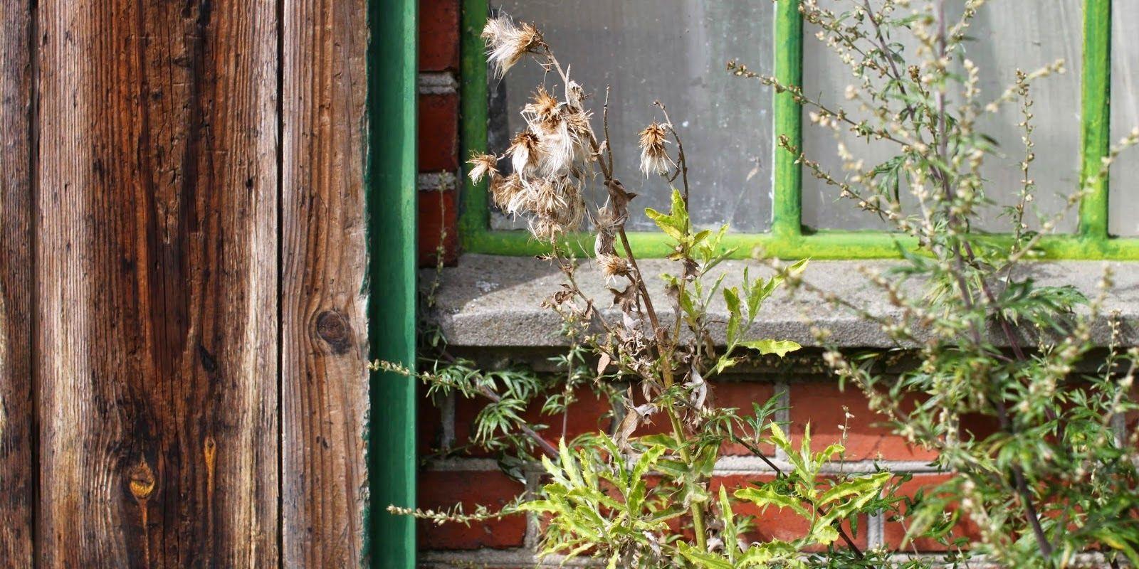 BARNDOM GENNEM NÆSEN - My childhood garden-memories