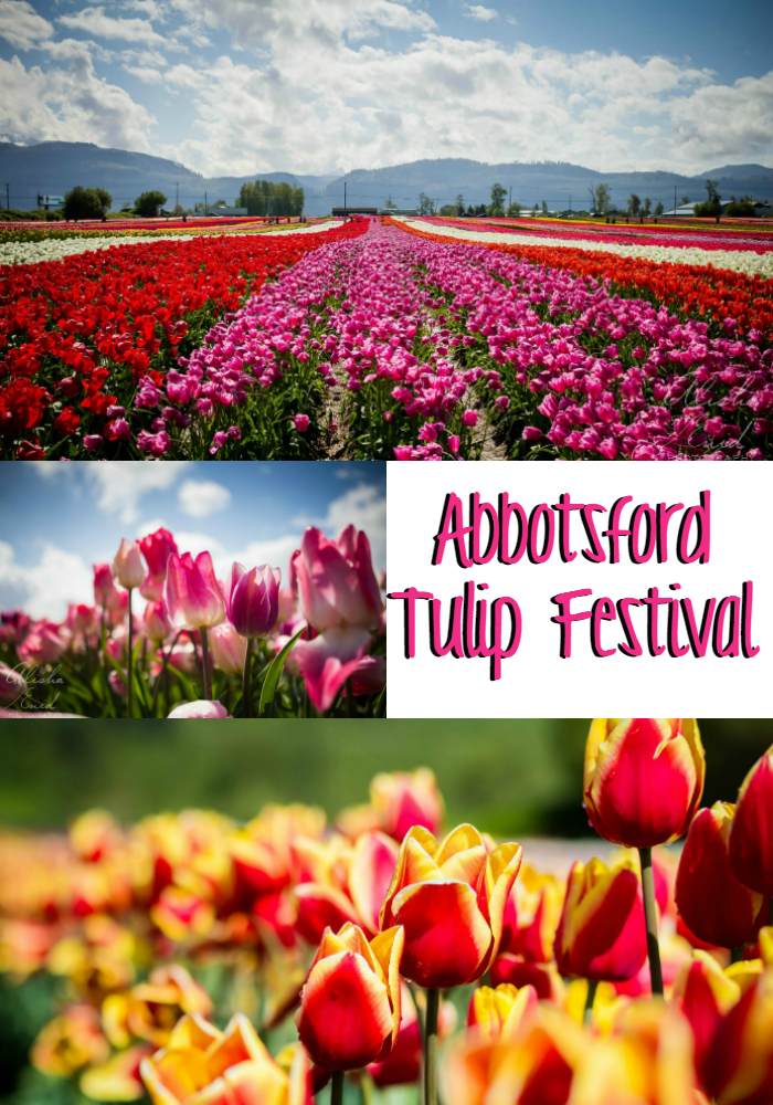 A trip to the Abbotsford Tulip Festival in Abbotsford, BC