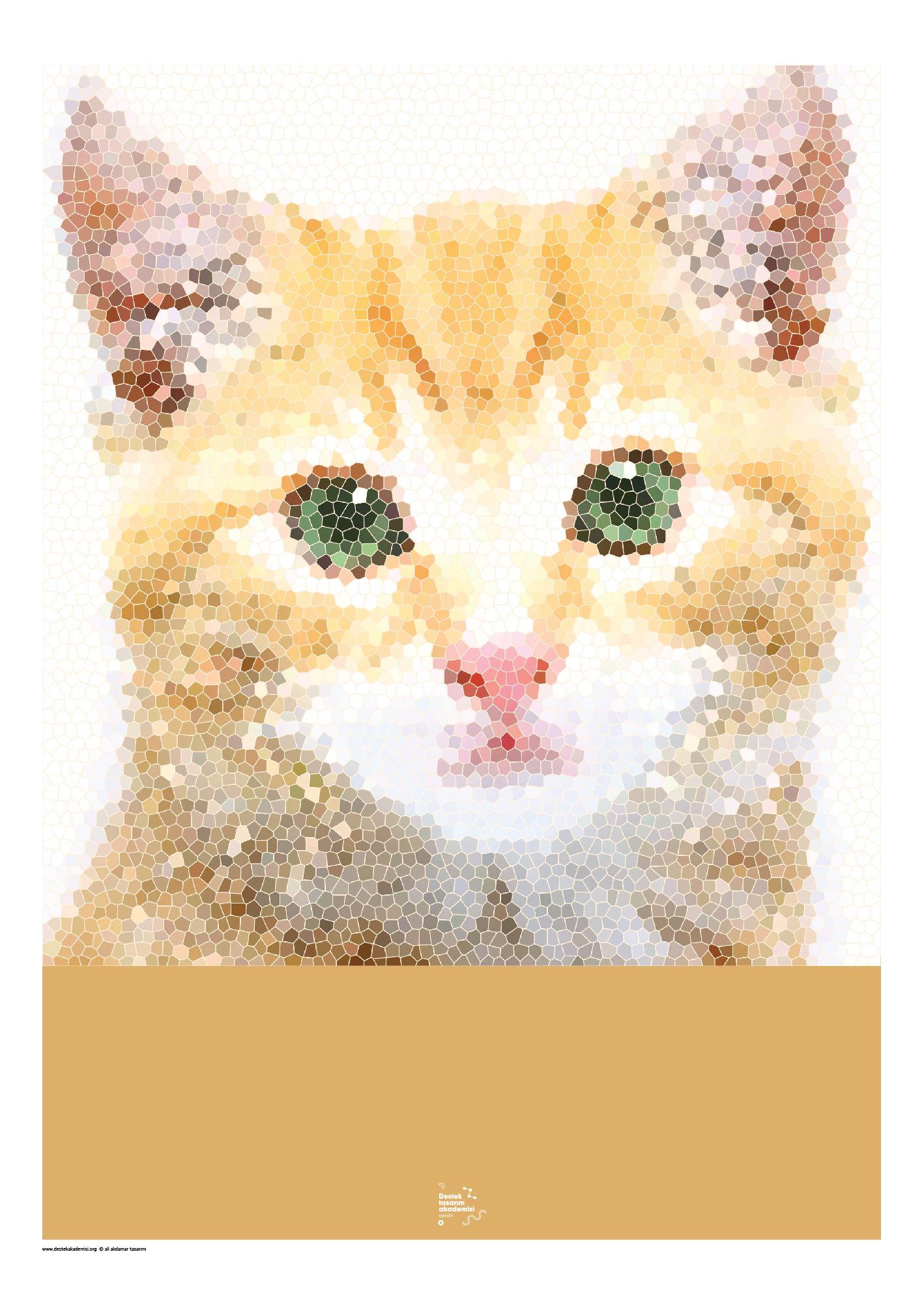 kedi1