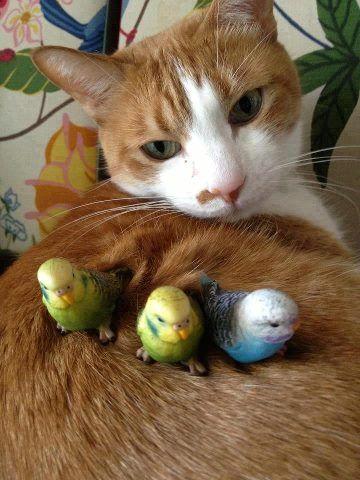 Animals Photo: cat & parrots