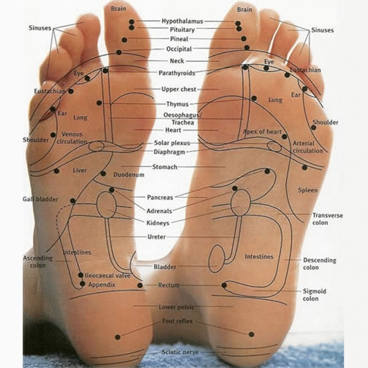 Free Acupuncture Point Diagram | Reflexology(pp_w1200_h1200).jpg