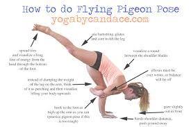 related image  flying pigeon pose pigeon pose yoga anatomy