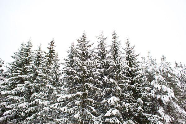 Ann-Kristina Al-Zalimi, norwegian spruce, forest, metsä, kuusimetsä, winter, talvi, midwinter, snö, snow, snowy trees, skandinavia, lumiset kuuset, lumiset puut
