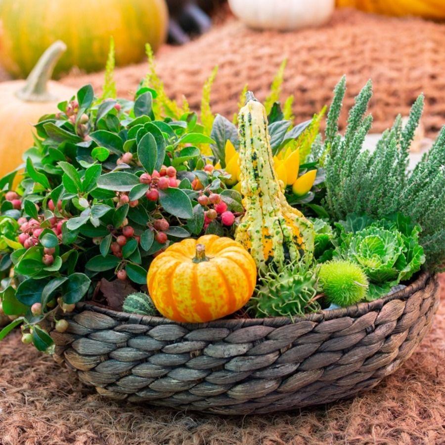 Leroymerlin Leroymerlinpolska Dlabohaterowdomu Domoweinspiracje Dekoracja Wrzos Dynia Kwiaty Jesien Pumpkin Vegetables