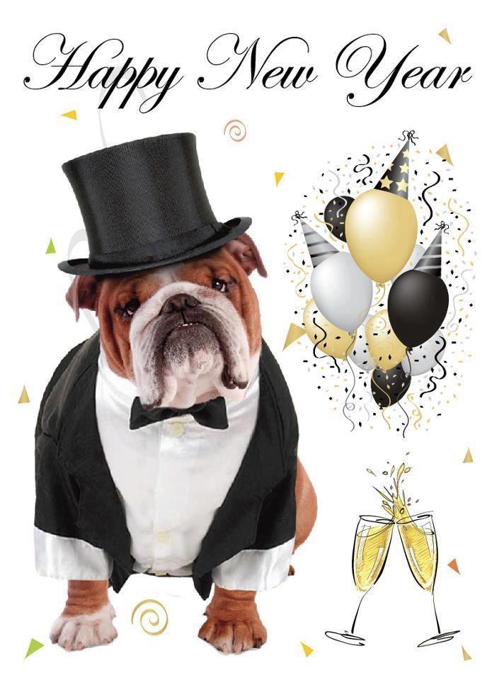 Happy New Year Bulldog Happy New Year Friends Bulldog Old
