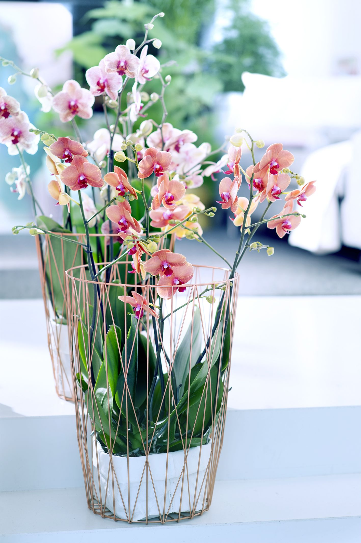 Orchid Flower Arrangement Ideas