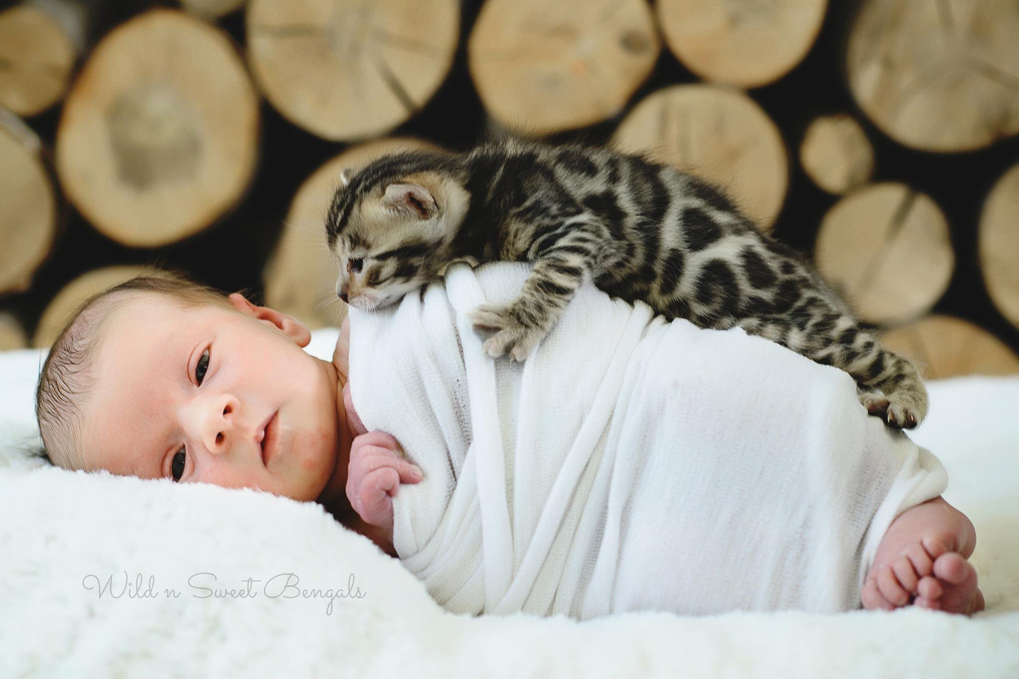 Sweetest Photo Ever Newborn Baby With A Newborn Bengal Kitten