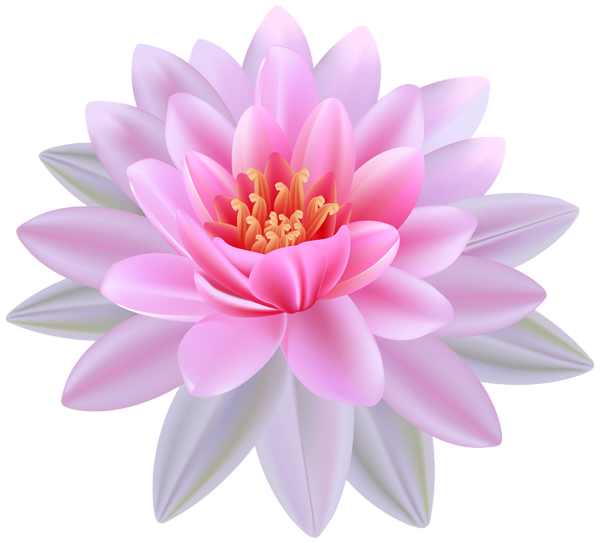 Pink Water Lily PNG Clipart Image (With images) Flowers