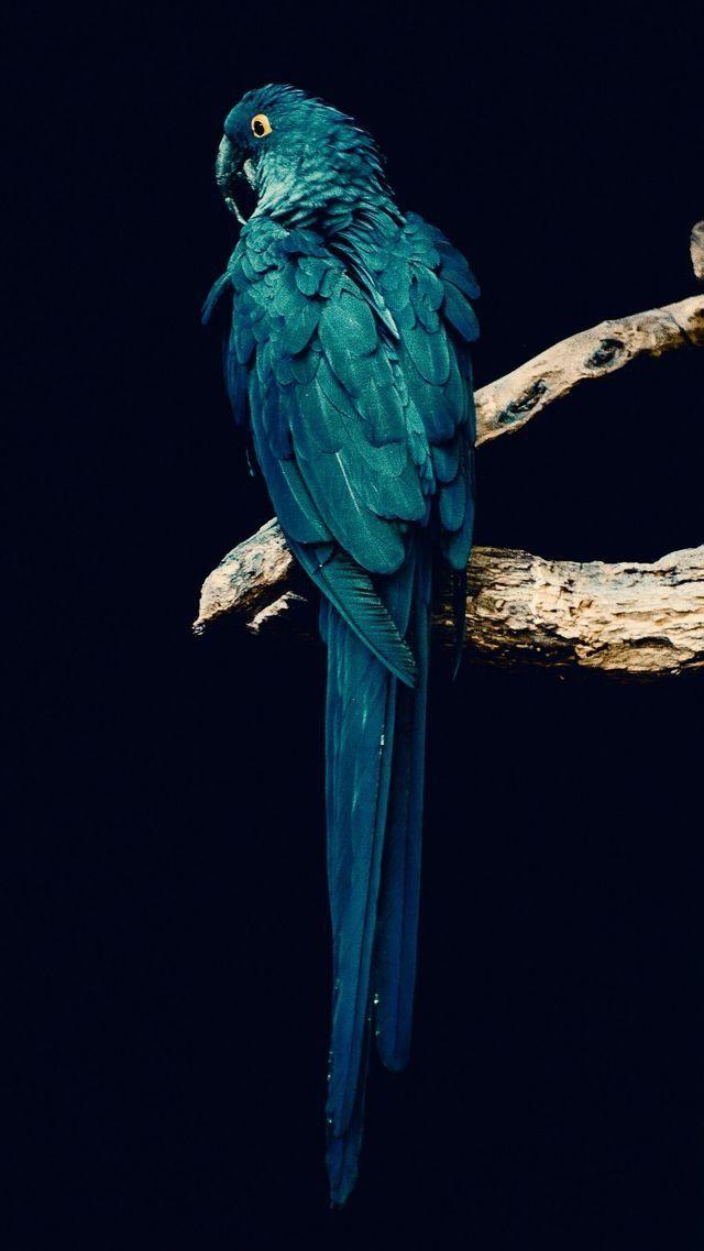 Animals,birds Wallpapers IPhone