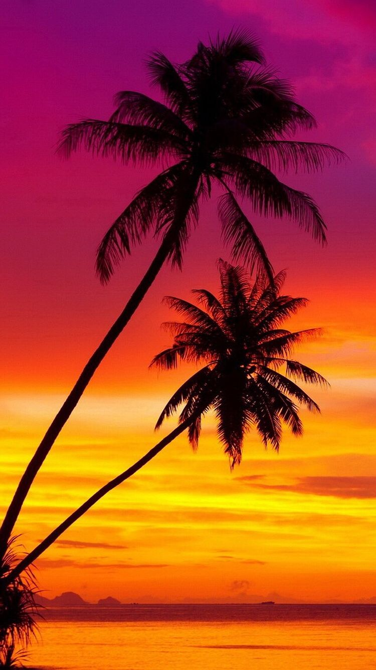 Vibrant Sunset Sunset Wallpaper Beautiful Landscapes Palm Trees Wallpaper