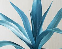 Siniagave - Energiaa kaikille aisteille! Pirteä tuoksu, jossa voi aistia raikkaan ja viileän veden sekä häivähdyksen jasmiinia ja myskiä.