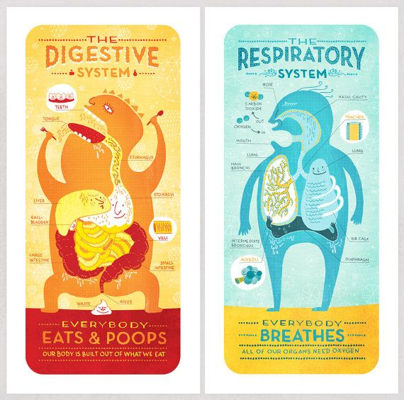 All Five Of The Body System Prints Deal Pinterest Body Systems