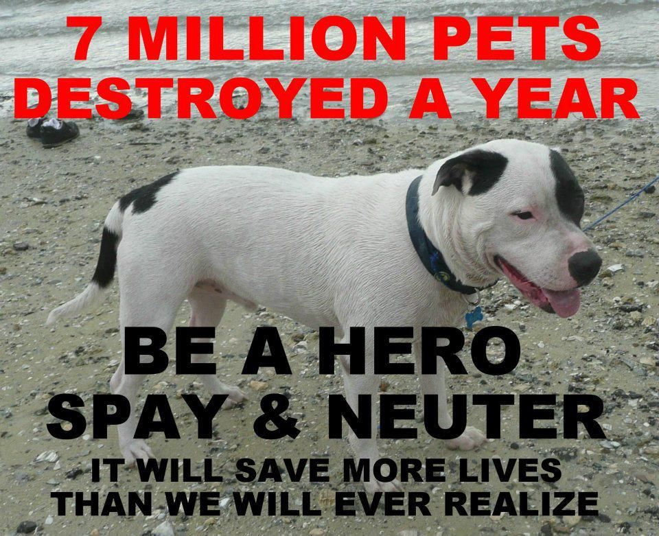 Spay & Neuter..moneis r available in nj Pet adoption