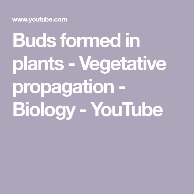 Photo of Buds formed in plants – Vegetative propagation – Biology