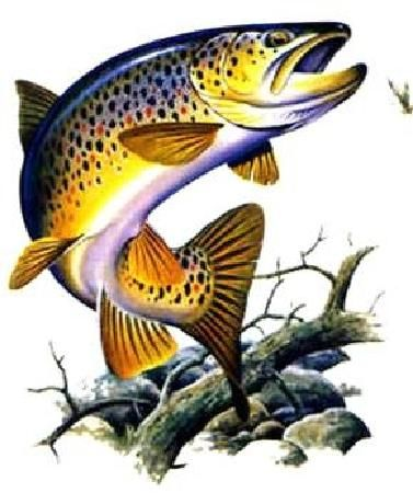 Brown Trout Hotel Fish Drawings Trout Tattoo Brown Trout