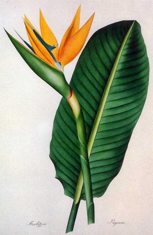 picturing plants and flowers joseph prestele bird of