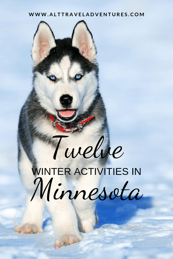 Twin Cities Winter Wonderland Grooming tools, Dog