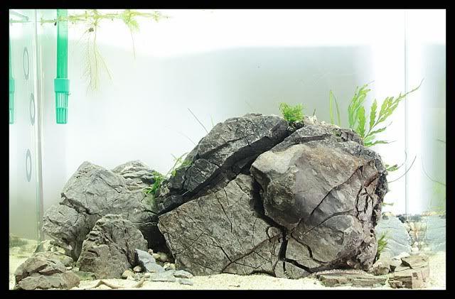 pin by stephanus mardianto on aquascape am nagement. Black Bedroom Furniture Sets. Home Design Ideas