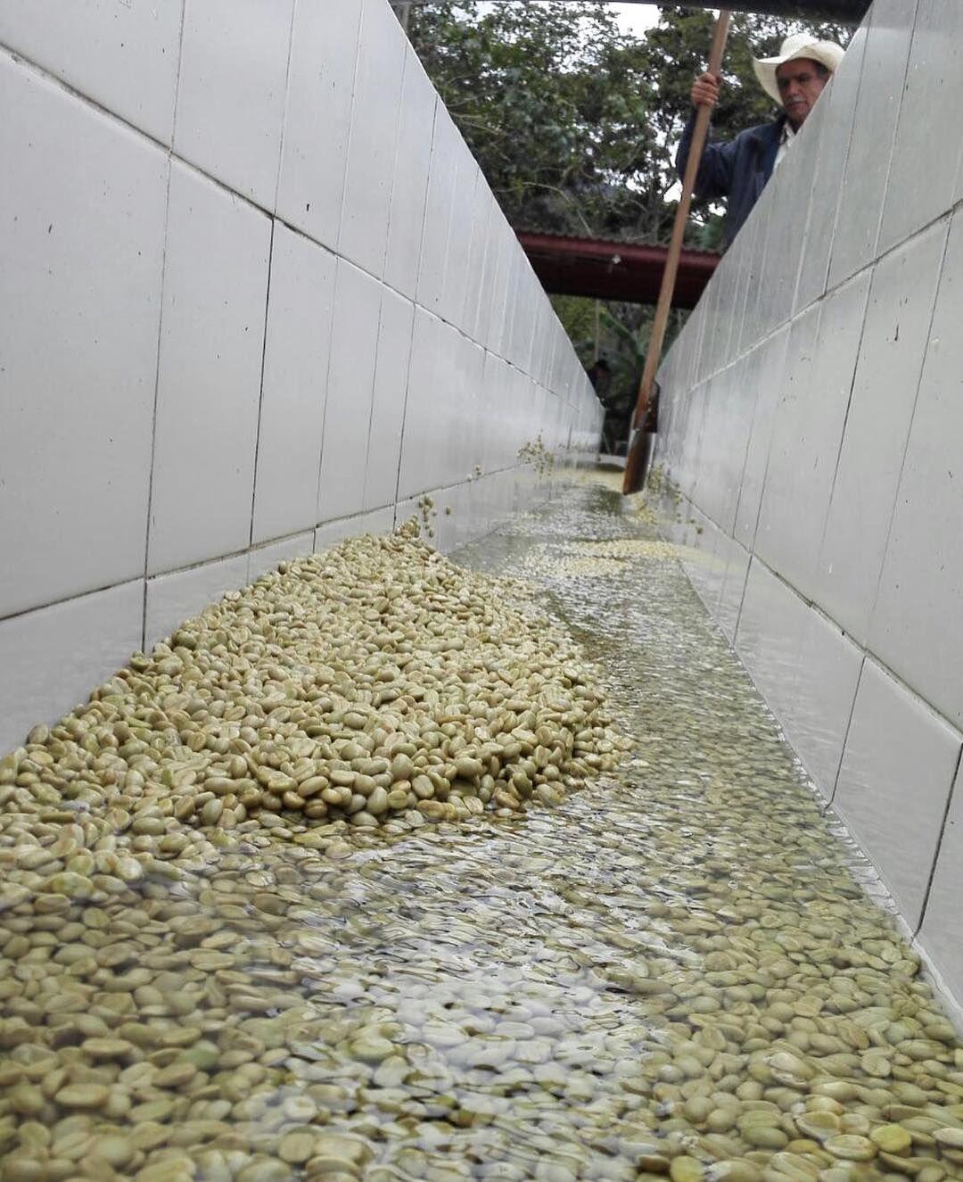 Instagram Photo By Drop Coffee Roasters Feb 20 2016 At 3 41am Utc Coffee Process Coffee Roasters Best Coffee Roasters