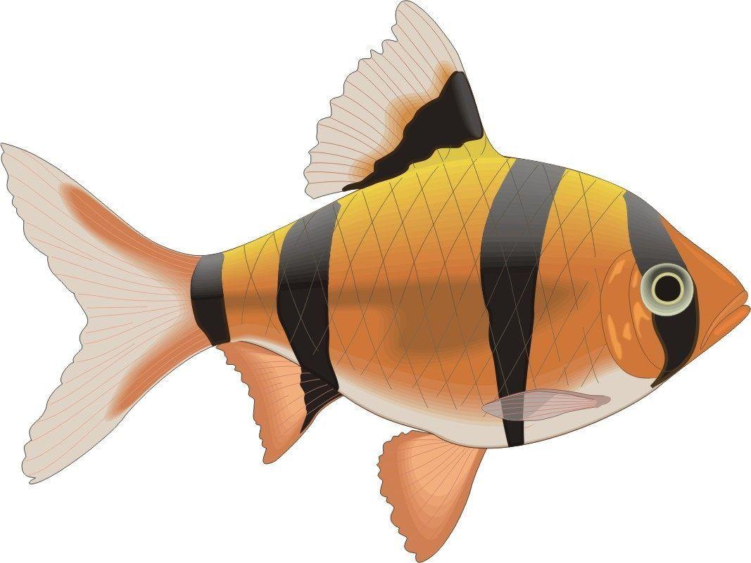 peces  Buscar con Google  peces  Pinterest  Searching
